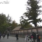 【伊勢神宮初詣 母娘旅】1日目 猿田彦神社とおかげ横丁をちらり