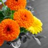 花のある暮らし 生活に「華」をプラスして豊かな気持ちに