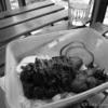 【クアラルンプール一人旅】2日目 タピオカミルクティーとNasi Lemak(ナシレマ)ランチ
